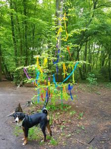 Mai auch im Wald